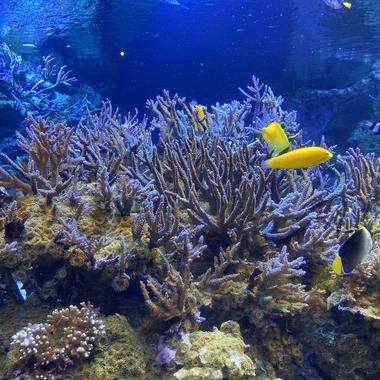 サンゴ礁は海のオアシス