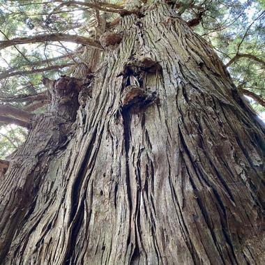 戸隠南西部の強力なパワースポット「千年杉と巌窟観音堂」