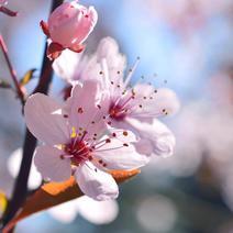 【4月・5月のご宿泊】満館のお知らせ(6月〜9月 ご予約受付中)