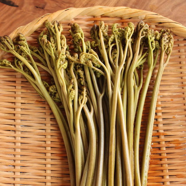 2020/05/19 独特な食感の山菜、蕨