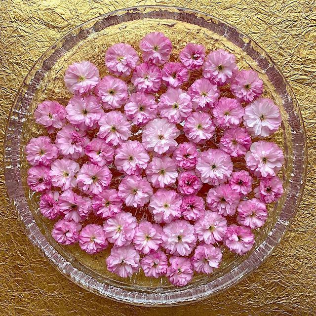 2020/05/12 八重桜をiittalaの大皿に並べて
